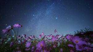 Cosmos Flower Nature Night Pink Flower Sky Starry Sky Stars 2400x1602 Wallpaper