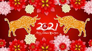 Bull Chinese New Year Flower New Year 2021 4515x2479 Wallpaper