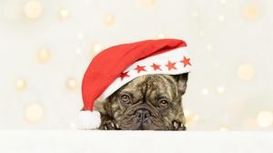 Dog Pet Santa Hat 4200x2800 Wallpaper