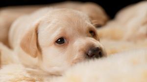 Puppy Dog Pet Baby Animal 2048x1365 Wallpaper