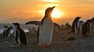 Penguin Wildlife 2000x1333 Wallpaper