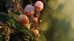 Macro Moss Mushroom Snail 3327x2036 wallpaper