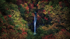 Nature Fall Outdoors Plants Waterfall 2880x1920 Wallpaper