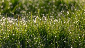 Bokeh Grass Nature Water Drop 2048x1365 Wallpaper