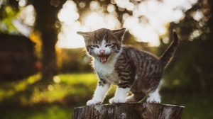 Baby Animal Cat Kitten Pet 3840x2560 Wallpaper