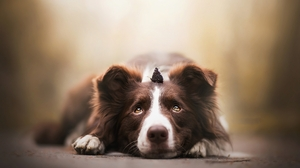 Animal Border Collie 2048x1365 Wallpaper