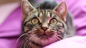Cat Pet Stare 6000x4000 Wallpaper