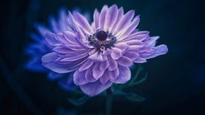 Dew Flower Macro Petal Purple Flower 2048x1367 Wallpaper