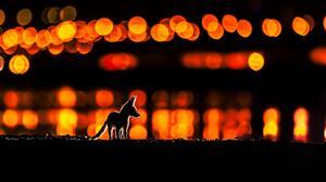 Animals Bokeh Night Mohammad Murad Kuwait City Lights Fox Baby Animals Silhouette 2048x1365 Wallpaper