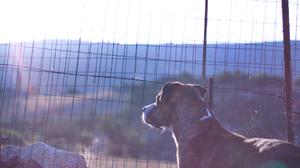 Dog Grid Sunshine 1920x1278 Wallpaper