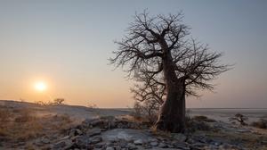 Botswana Nature Outdoors Landscape Trees Sunset 3128x1707 Wallpaper