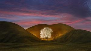 Magnolia Sunset 2536x1676 Wallpaper