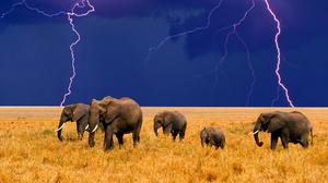 Animal Elephant 1920x1200 wallpaper