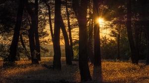 Forest Sunbeam 1920x1080 Wallpaper