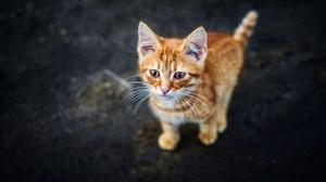 Kitten 3840x2160 wallpaper