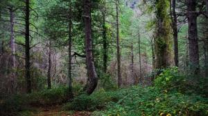 Earth Forest Nature Tree Vegetation 2000x1338 Wallpaper
