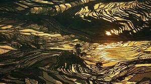 Nature Landscape Rice Paddy China Water Farm Gold Terraced Field Sunlight Yellow 1920x1200 Wallpaper