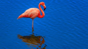 Bird Flamingo Reflection Wildlife 2048x1334 wallpaper