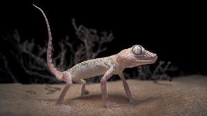 Gecko Lizard Sand 3000x2002 Wallpaper