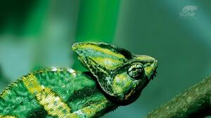 Animal Chameleon Green Lizard Reptile 1920x1200 Wallpaper