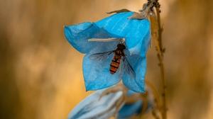 Bellflower Blue Flower Fly Insect Macro 3840x2560 Wallpaper