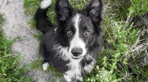 Photo Album Photography Dog Border Collie Grass Lumix Animals Love 4592x3064 Wallpaper