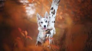 Dog Fall Pet Stare 2048x1365 wallpaper
