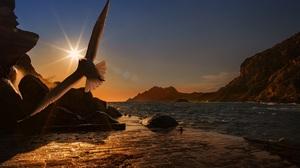 Bird Seagull Sunbeam 2999x1999 wallpaper