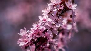 Blossom 3840x2400 Wallpaper