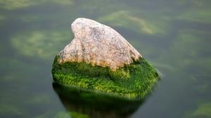 Water Moss 3840x2400 Wallpaper