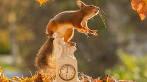 Clock Fall Rodent Squirrel Wildlife 2048x1463 Wallpaper