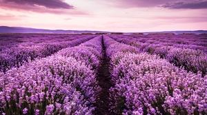 Field Flower Landscape Lavender Purple Flower Sky Summer Sunset 5788x3864 Wallpaper