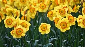 Flower Yellow Flower 1920x1281 Wallpaper