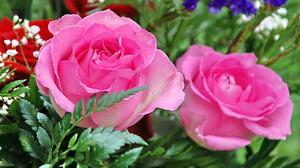 Flower Pink Rose 1920x1200 Wallpaper
