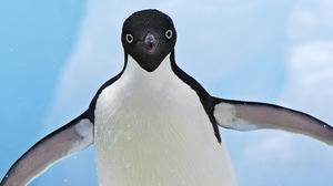 Animal Penguin 1920x1200 Wallpaper