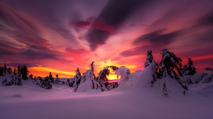 Nature Sky Snow Sunset Tree Winter 2048x1216 Wallpaper