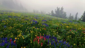 Colorful Earth Flower Fog Meadow Spring 5616x3744 Wallpaper