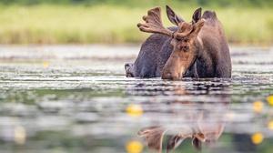 Water Reflection Wildlife 2048x1365 Wallpaper
