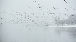 Wildlife Flock Of Birds 2048x1367 wallpaper