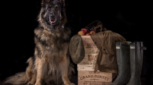 Dog German Shepherd Pet 5728x4000 Wallpaper