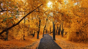 Nature Fall Foliage 2000x1333 Wallpaper
