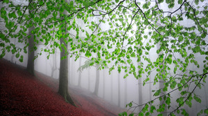 Nature Trees Leaves Mist Tree Trunk Branch Forest Hill Landscape Plants Outdoors 1920x1080 Wallpaper