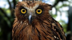Bird Buffy Fish Owl Feather 3840x2400 Wallpaper
