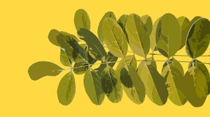 Artistic Artwork Digital Art Leaf Minimalist Simple 3146x2229 Wallpaper