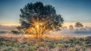 Fog Nature Sunbeam Sunrise Tree 2048x1152 Wallpaper