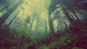 Canopy Fog Forest Nature 3840x2160 Wallpaper