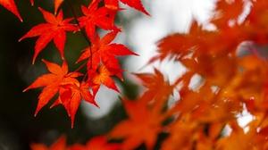 Fall Leaf Maple Leaf 3072x2035 Wallpaper