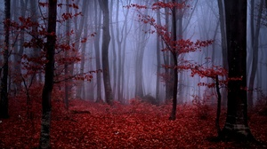 Forest Trees Mist Nature Landscape Low Light Red Leaves 3840x2160 wallpaper