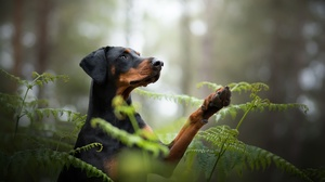Dog Pet Fern 2048x1312 wallpaper