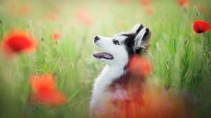 Dog Flower Pet Poppy 2048x1367 Wallpaper